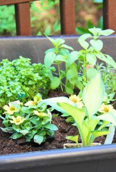 Endless Herbs without Endless Watering