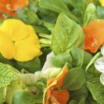 Fresh Herb Salad w/ Avocado-Basil Vinaigrette