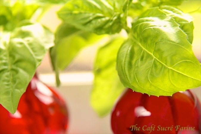 An Endless Supply of Fresh Basil for Pennies! Yes, you can! And it's amazingly easy and incredibly cheap way to have all the basil you need, all the time!