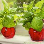 An Endless Supply of Fresh Basil for Pennies!