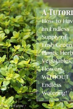 How to have Endless Fresh Herbs & Beautiful Plants on Your Deck, Patio or Porch Without ENDLESS Watering!!