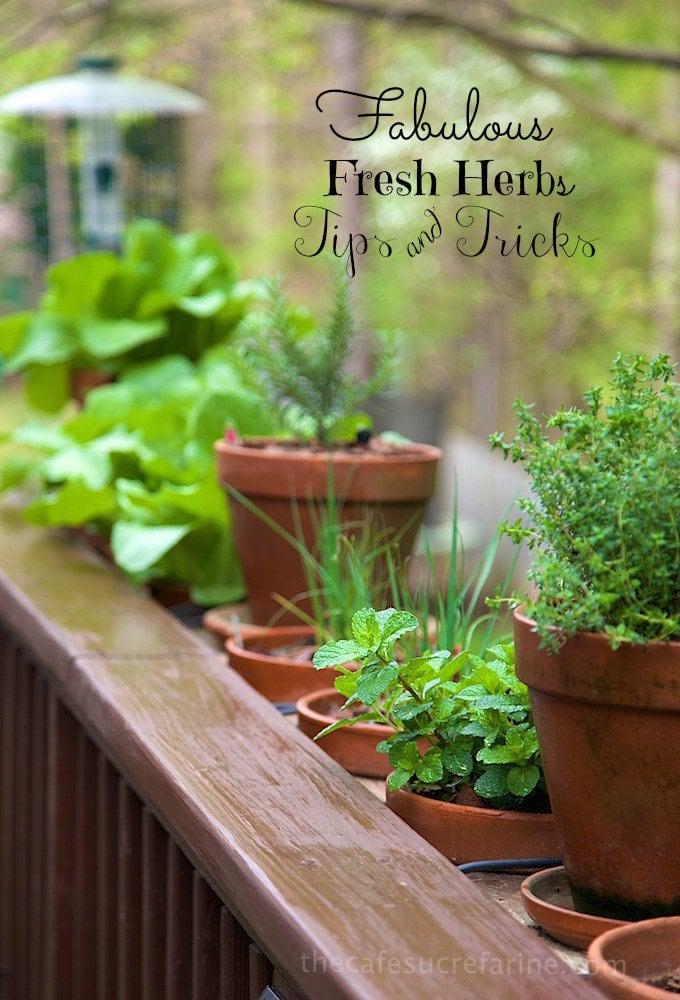 Fresh Herbs (8).jpg