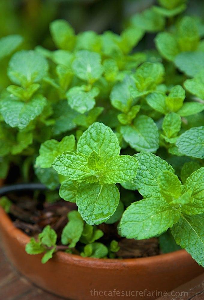Fresh Herbs (9)