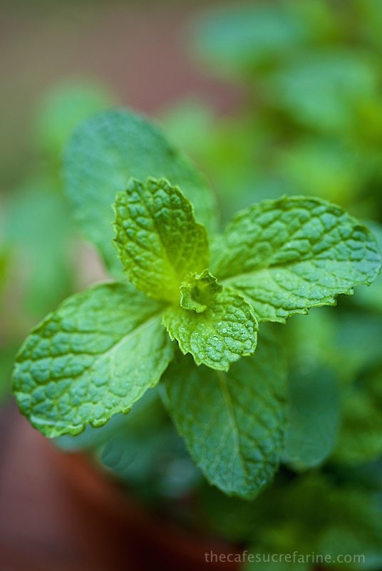 Mint Basil Syrup - a wonderful sauce & great way to use all that crazy-growing mint
