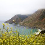 Big Sur - PCH and wildflowers