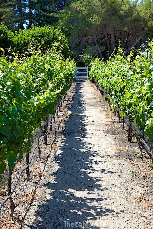California Coast Road Trip - Part 2 - Claiborne Winery