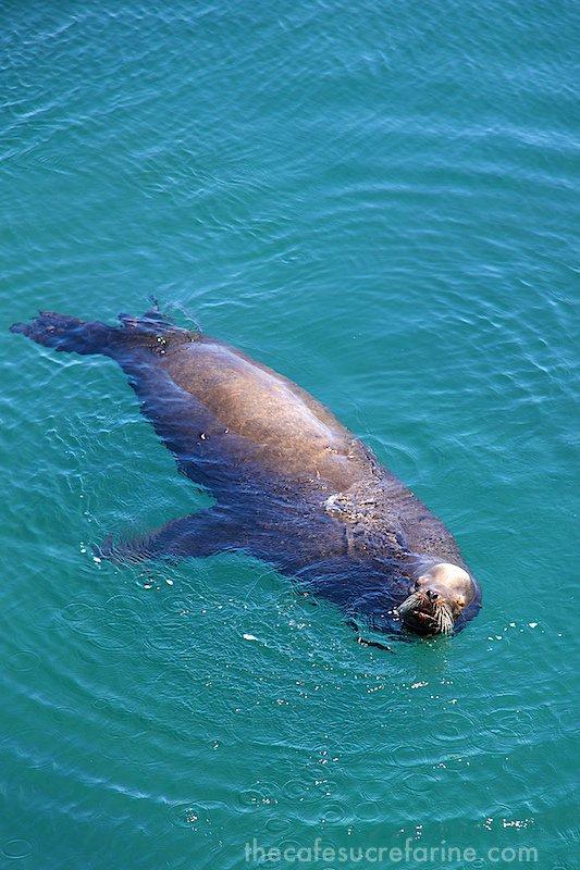 Monterey Bay - sea otter