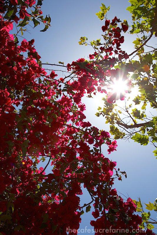 Monterey flowers-sun