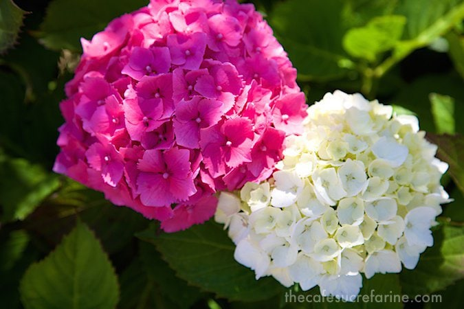 Monterey flowers
