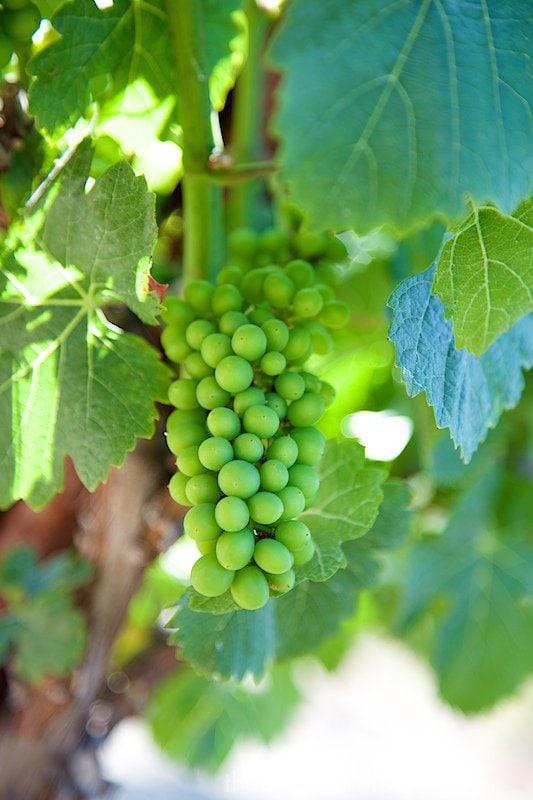 California Coast Road Trip - Part 2 - SLO Wineries (1)