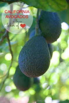California Avocados are amazing and grown with tender loving care.