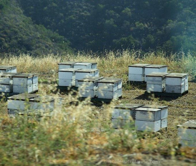 How Avocados Grow. California Avocado Groves, bee boxes.