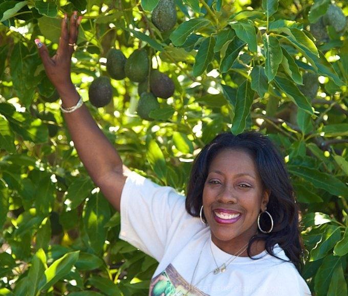 How Avocados Grow. California Avocado Groves, Angela at California Avocado Commission.
