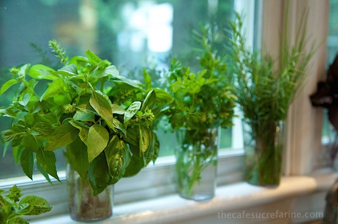 Horizontal photo of small vases of herbs being rooted in water on a window ledge.