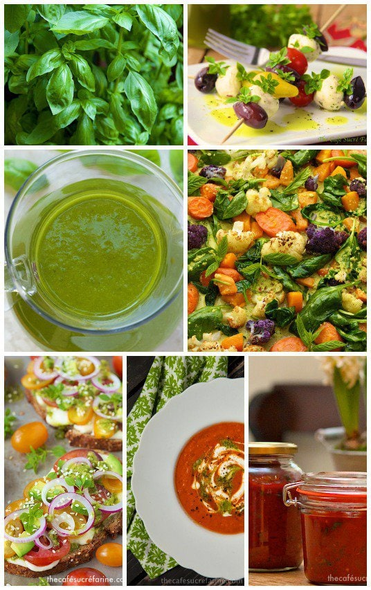 A photo collage of pictures of basil, basil oil and recipes that include basil.