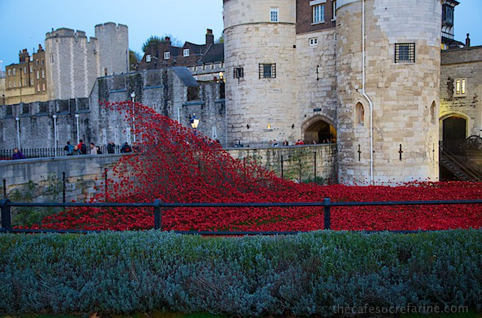 Poppies around the Tower of London. An amazing Remembrance Day 2014 display.
