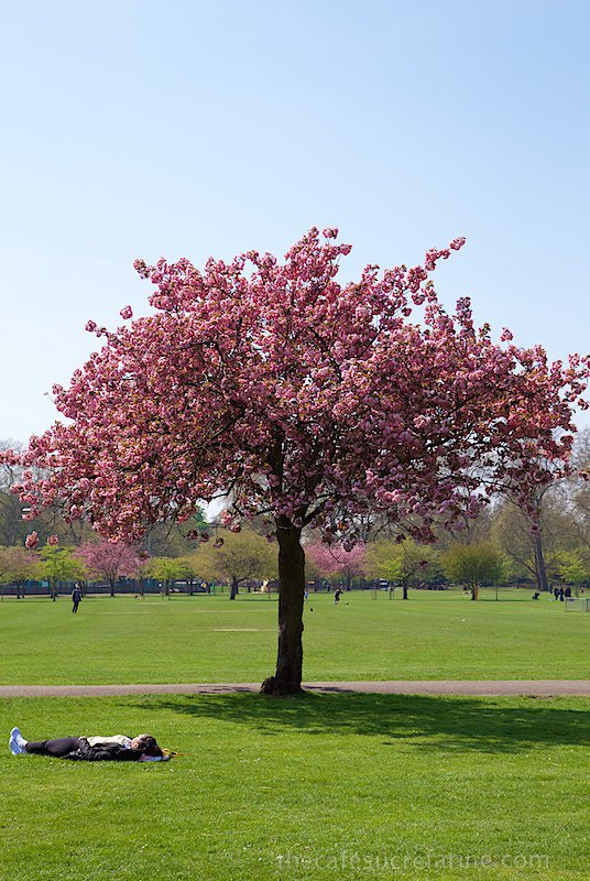 London Spring - Battersea Park, London, UK