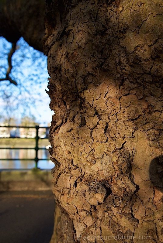 London Spring - Fulham Park, London, UK