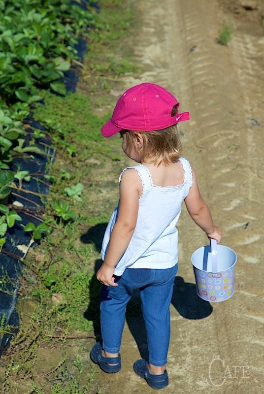 Emmy in the strawberry patch - www.thecafesucrefarine.com