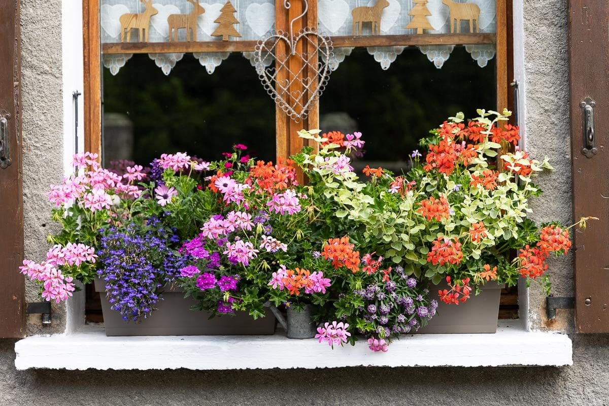 Horizontal photo of a typical window flower box in Argentiére, France.