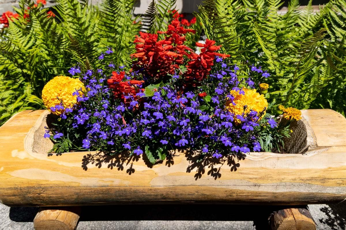 Horizontal photo of a natural log flower box planter along a street in Argentiére, France.