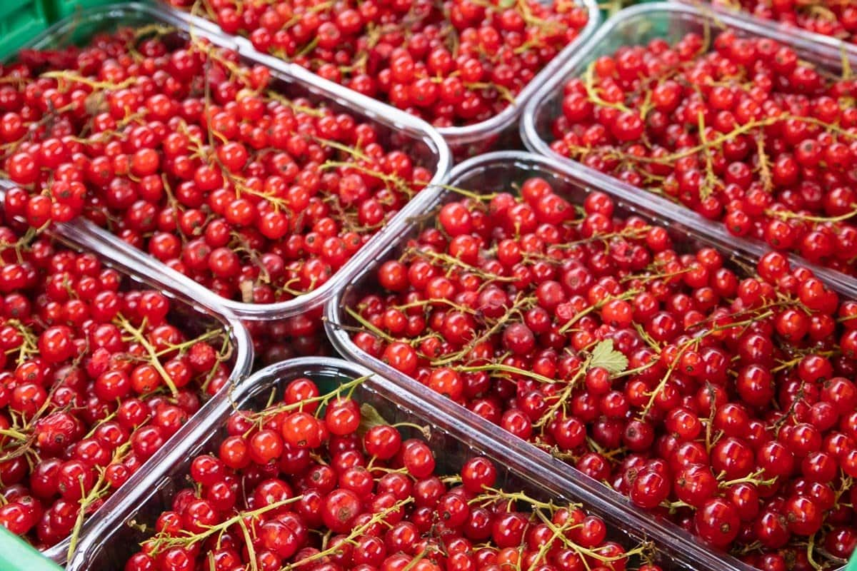 Horizontal closeup photo of containers of fresh currants at the Les Houches artisan market.