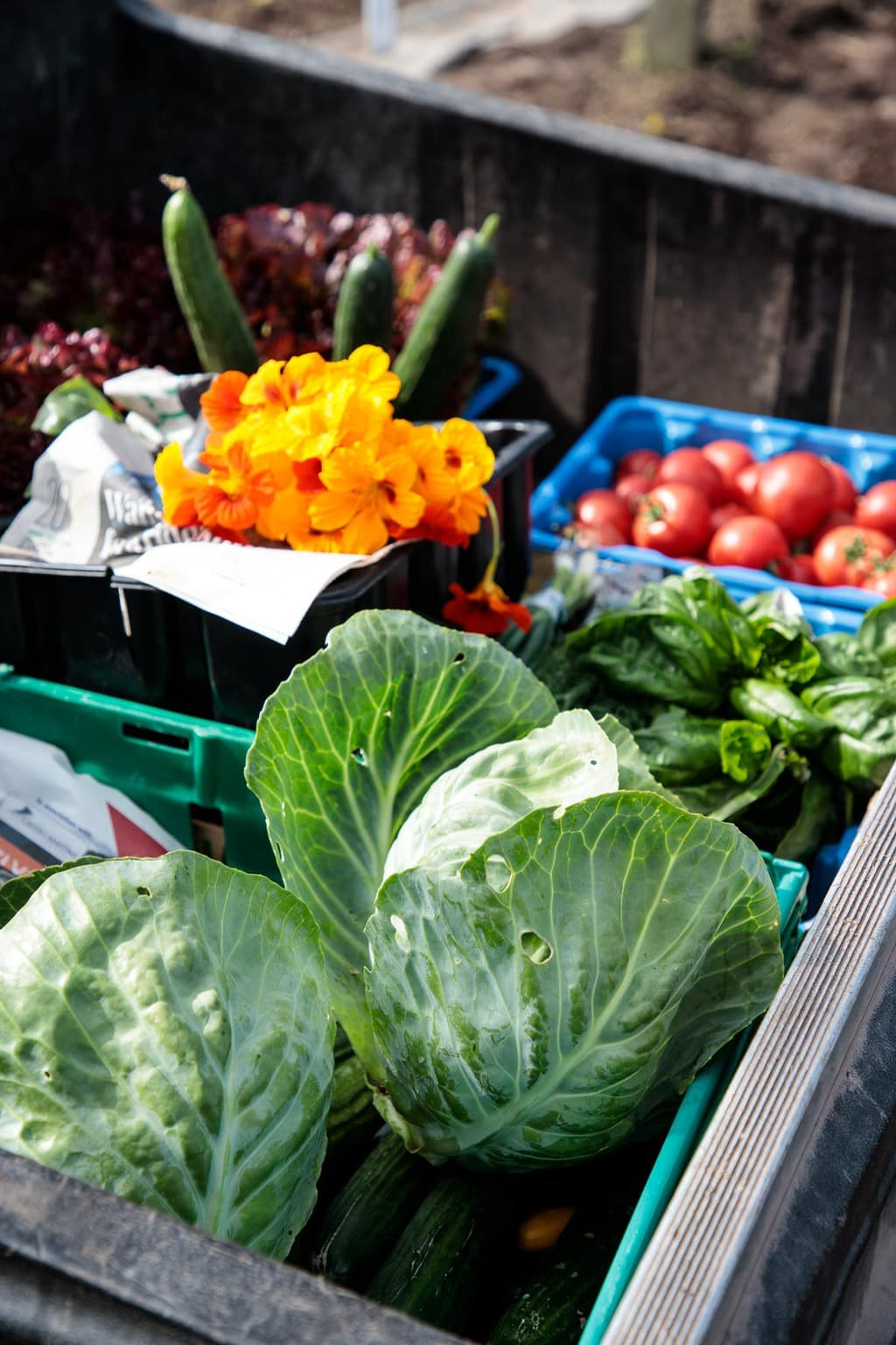 Photo of vegetables and fresh flowers just harvested at the Ballymaloe Farms.