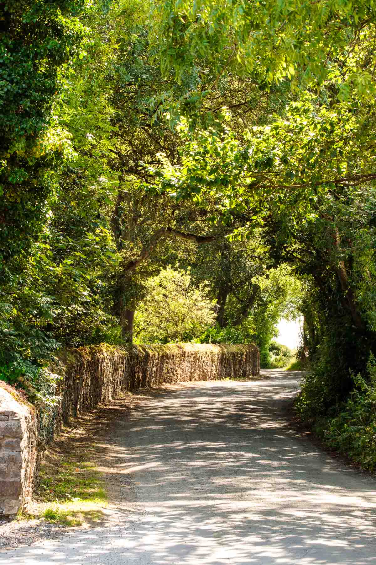Photo of the country road that leads to Ballymaloe Cookery School.
