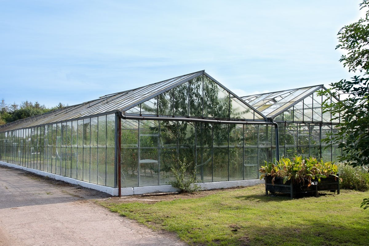 Photo of the glass houses at Ballymaloe Farm that produce many of the vegetables for the Ballymaloe farm and cookery school.
