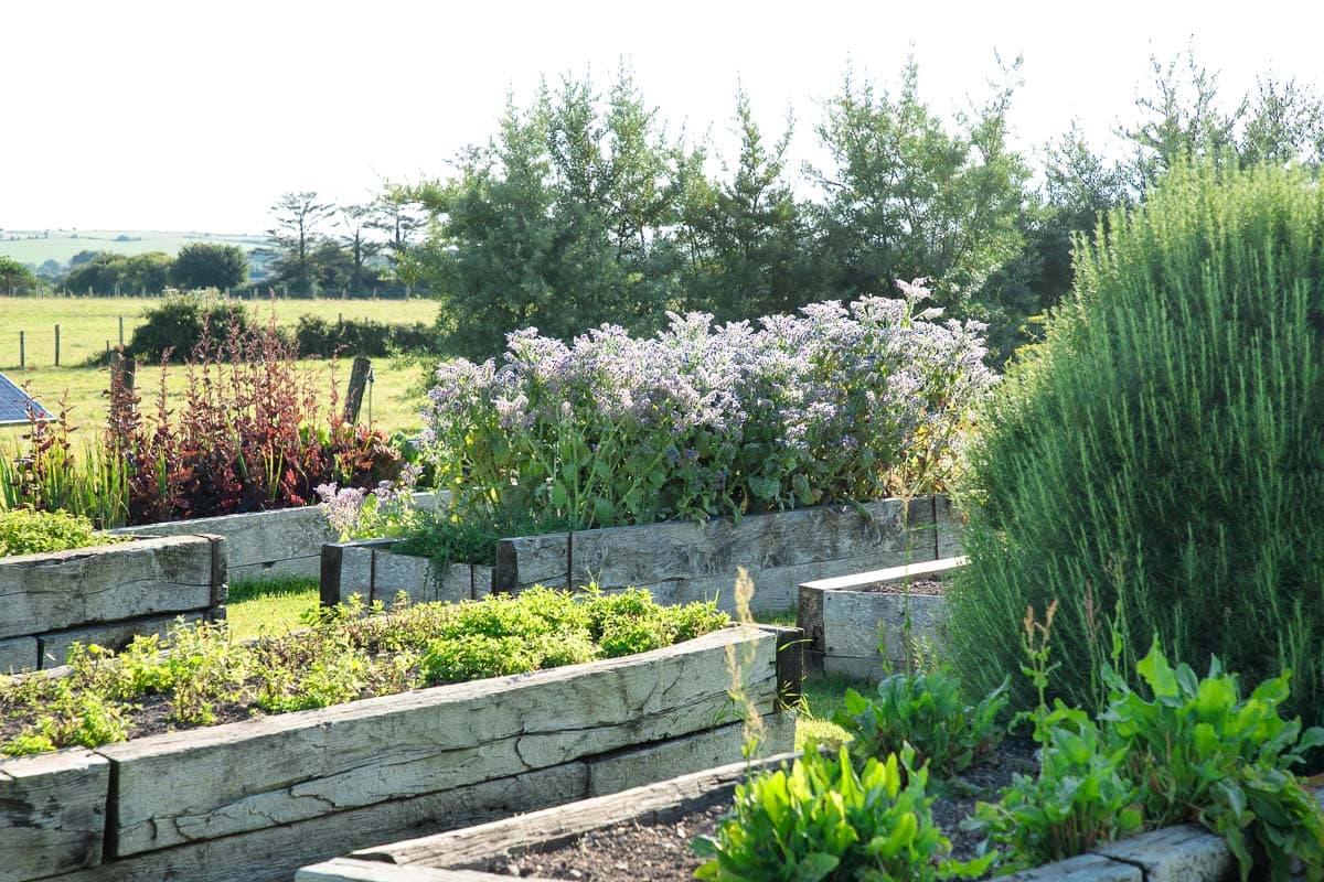 Photo of raised bed gardens at Ballymaloe Cookery School in Shanagarry, Ireland.