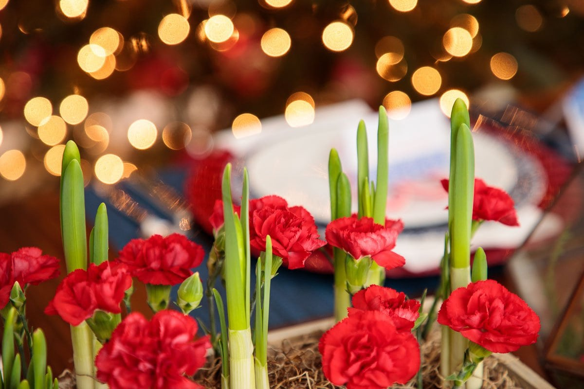 Closeup photo of festive flowers for Holiday Table Inspiration Ideas.