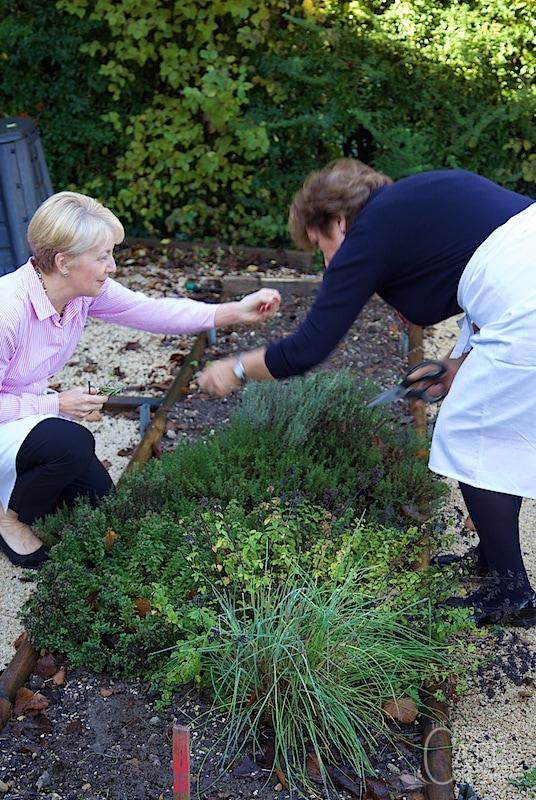 Cuisine de Provence - herb garden