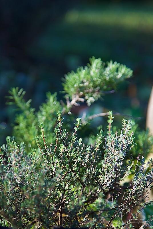 Cuisine de Provence - wild thyme