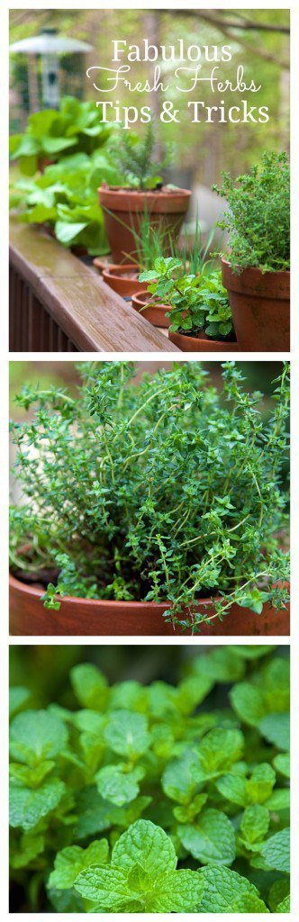 Great tips and tricks when using Fabulous Fresh Herbs from the garden in everyday cooking. Including some recipes featuring those little lovable greens.