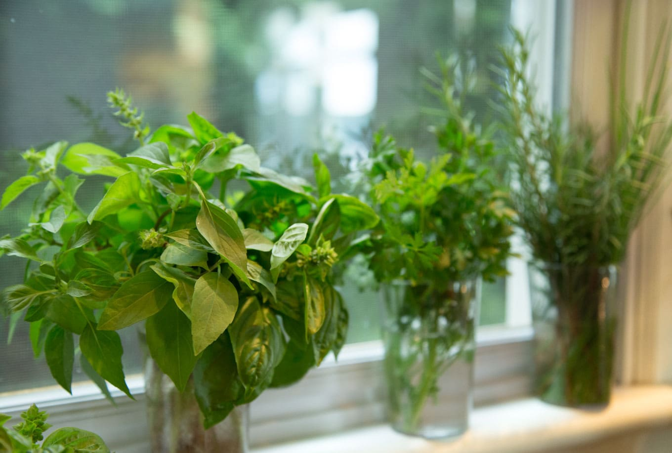 My Favorite Trick for Summer Herbs - How to have fresh herbs in your kitchen and at your fingertips all summer long! thecafesucrefarine.com