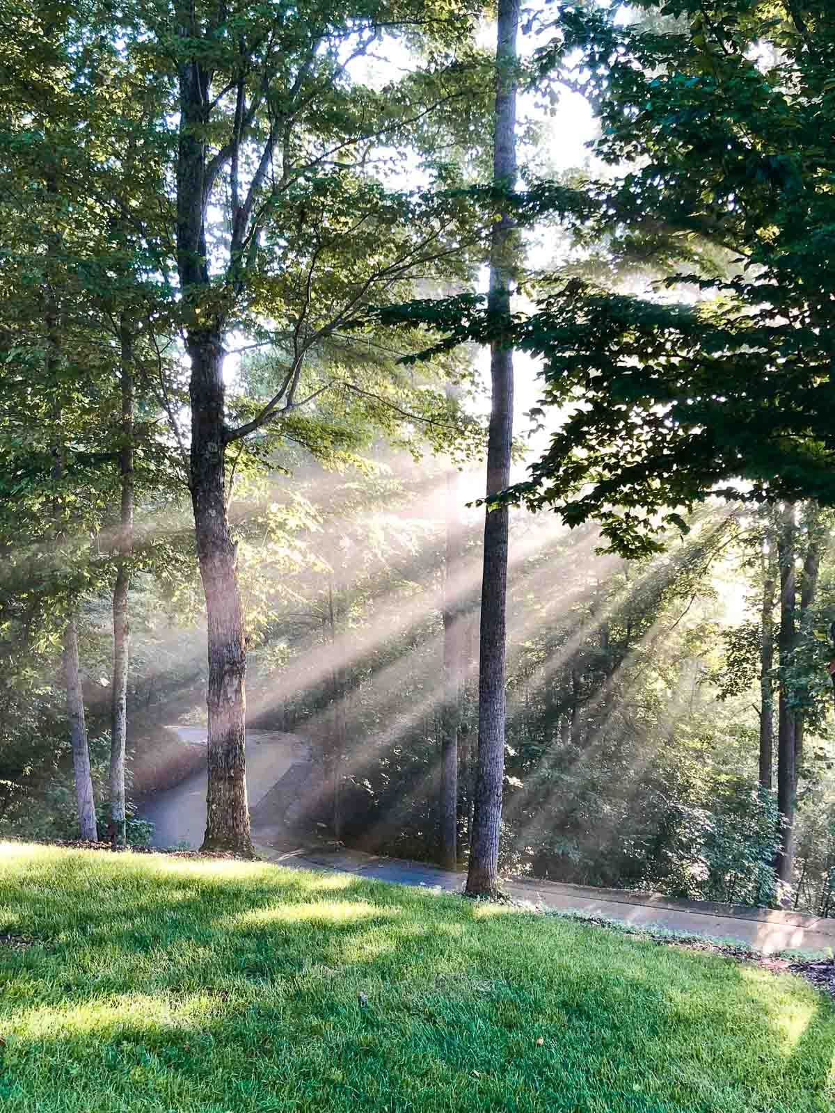 An outdoor photo of morning shafts of light shining through mountain trees at Hope View.
