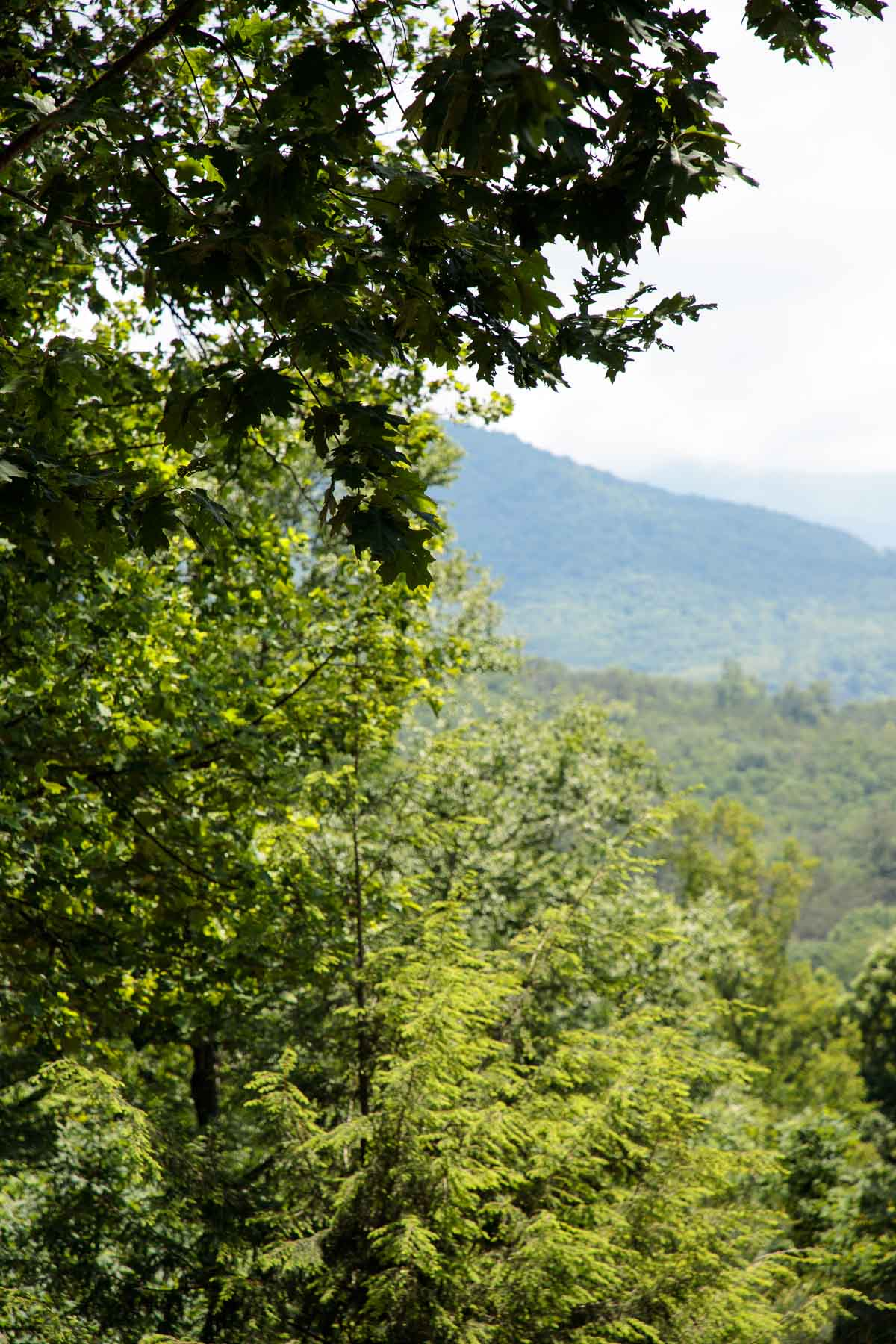 A panoramic photo of the Swannanoa Mountains from Hope View.