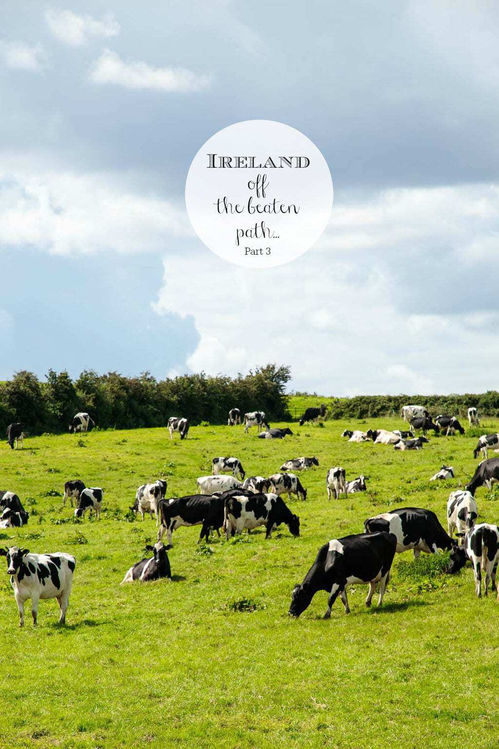 Photo of the Irish countryside with a herd of cattle grazing on the grass. A graphic is at the middle top center of the picture.