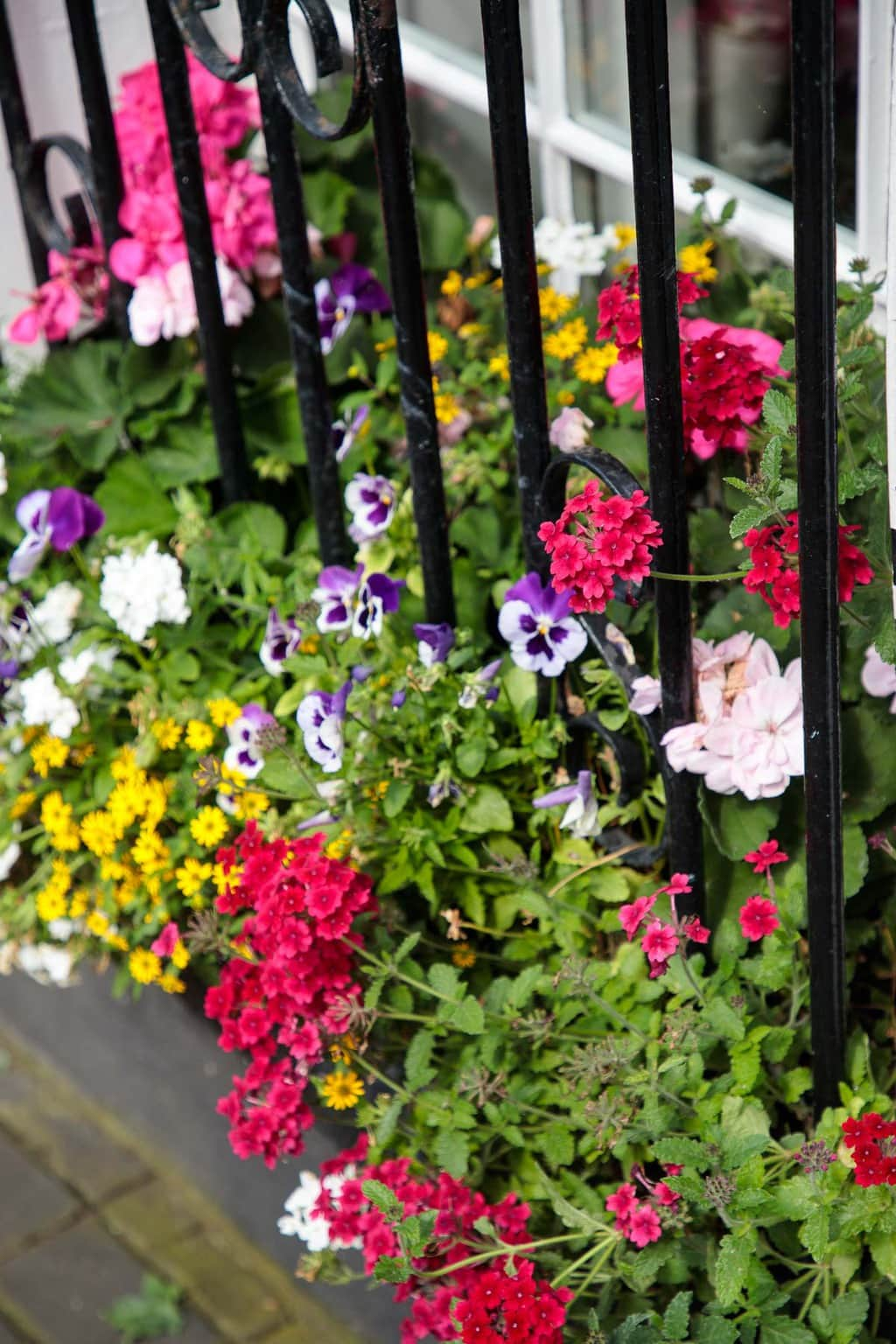 Photo of flowers in a front yard of a home in Malahide, Ireland.