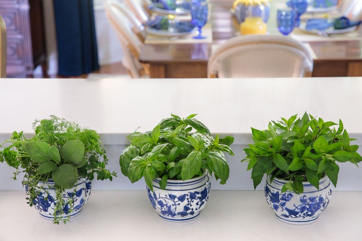 Photo of herbs in water in pots on a kitchen counter from My Favorite Trick for Summer Herbs post.