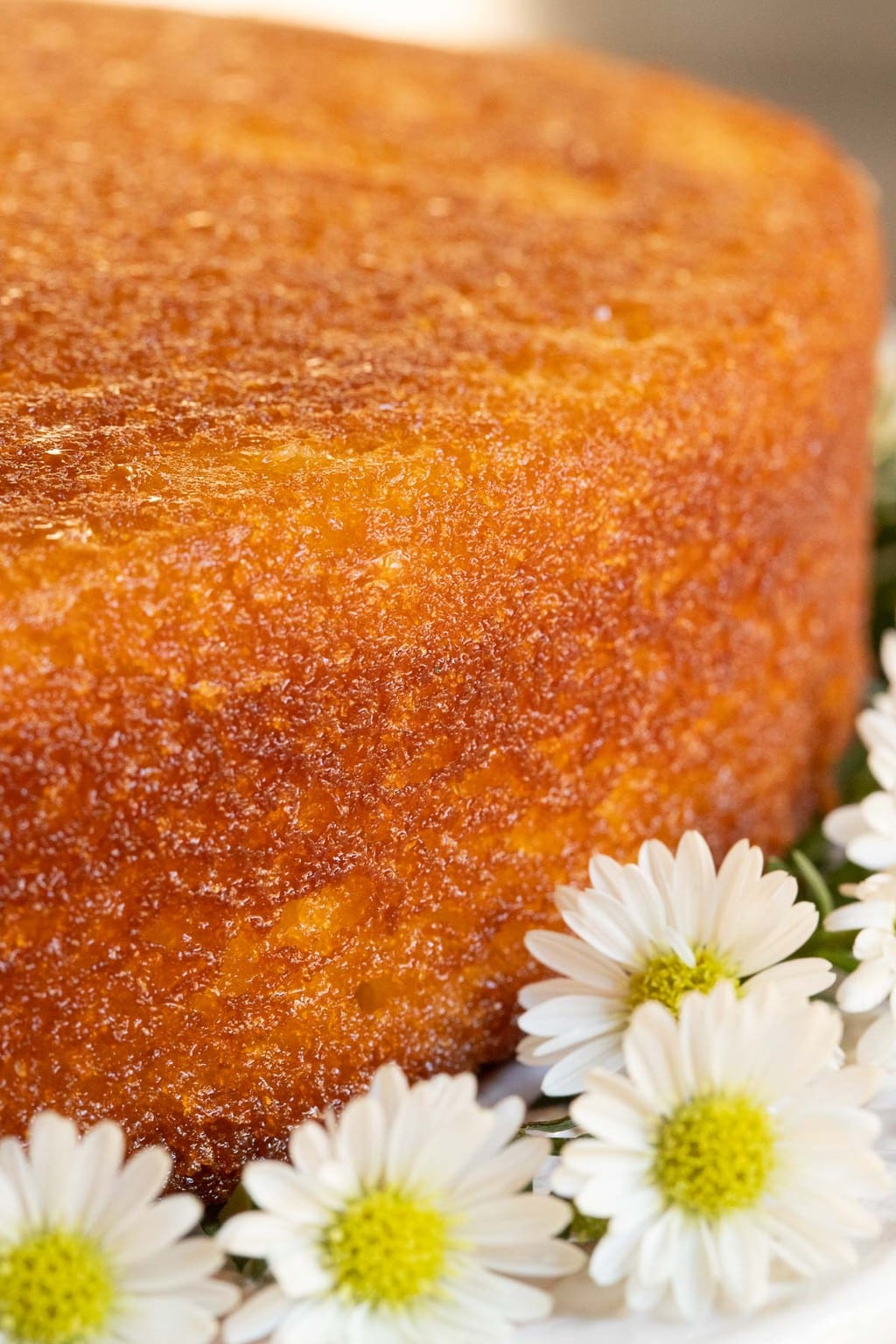 Vertical extreme closeup photo of the side of a Ridiculously Easy Orange Olive Oil Cake garnished with mini daisies.