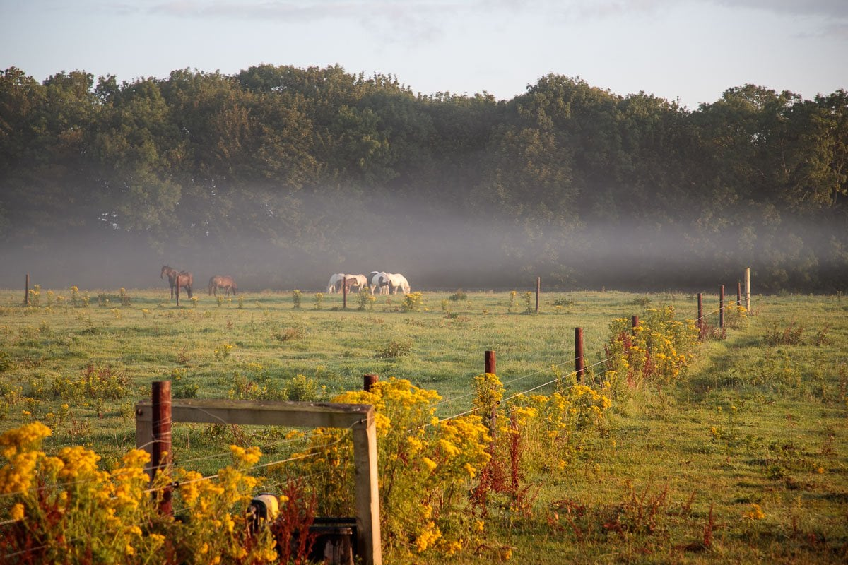 Photo of horses in a field at dawn near Castlemartyr Resort.