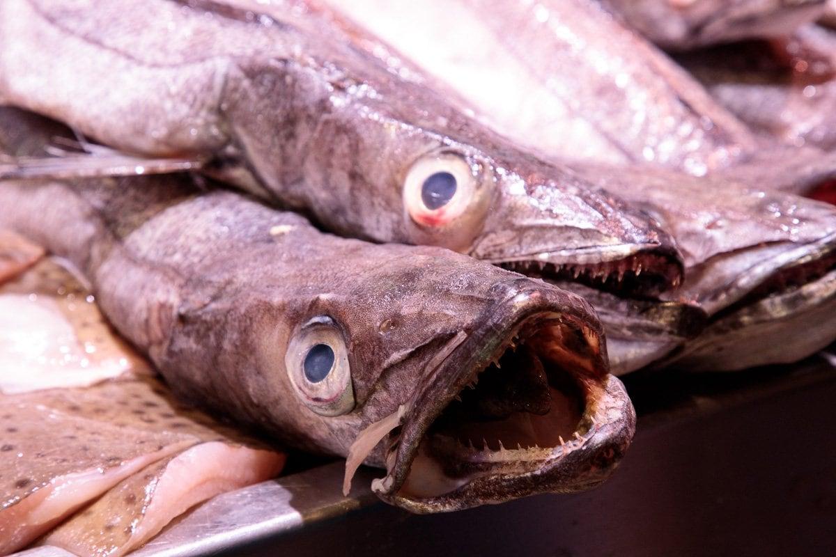 Closeup photo of hake fish at the English Market in Cork.