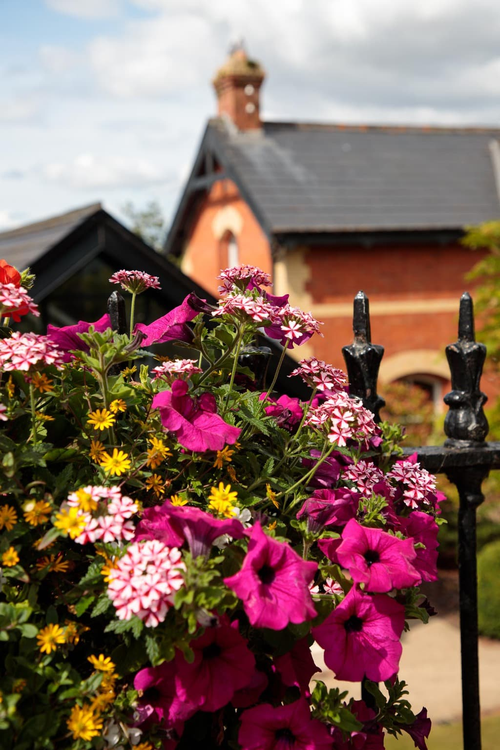 Photo of flowers by Cultra Station in Holywood, Northern Ireland.
