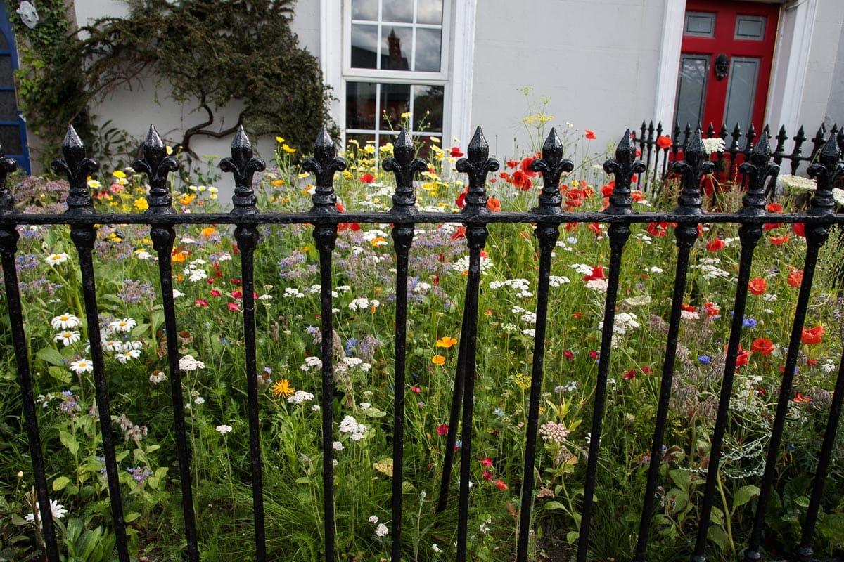 Photo of a house garden in Cork, Ireland.
