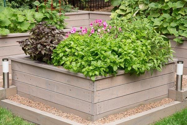 A photo of Scott's herb garden raised bed.