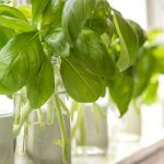 My Favorite Trick for Summer Herbs