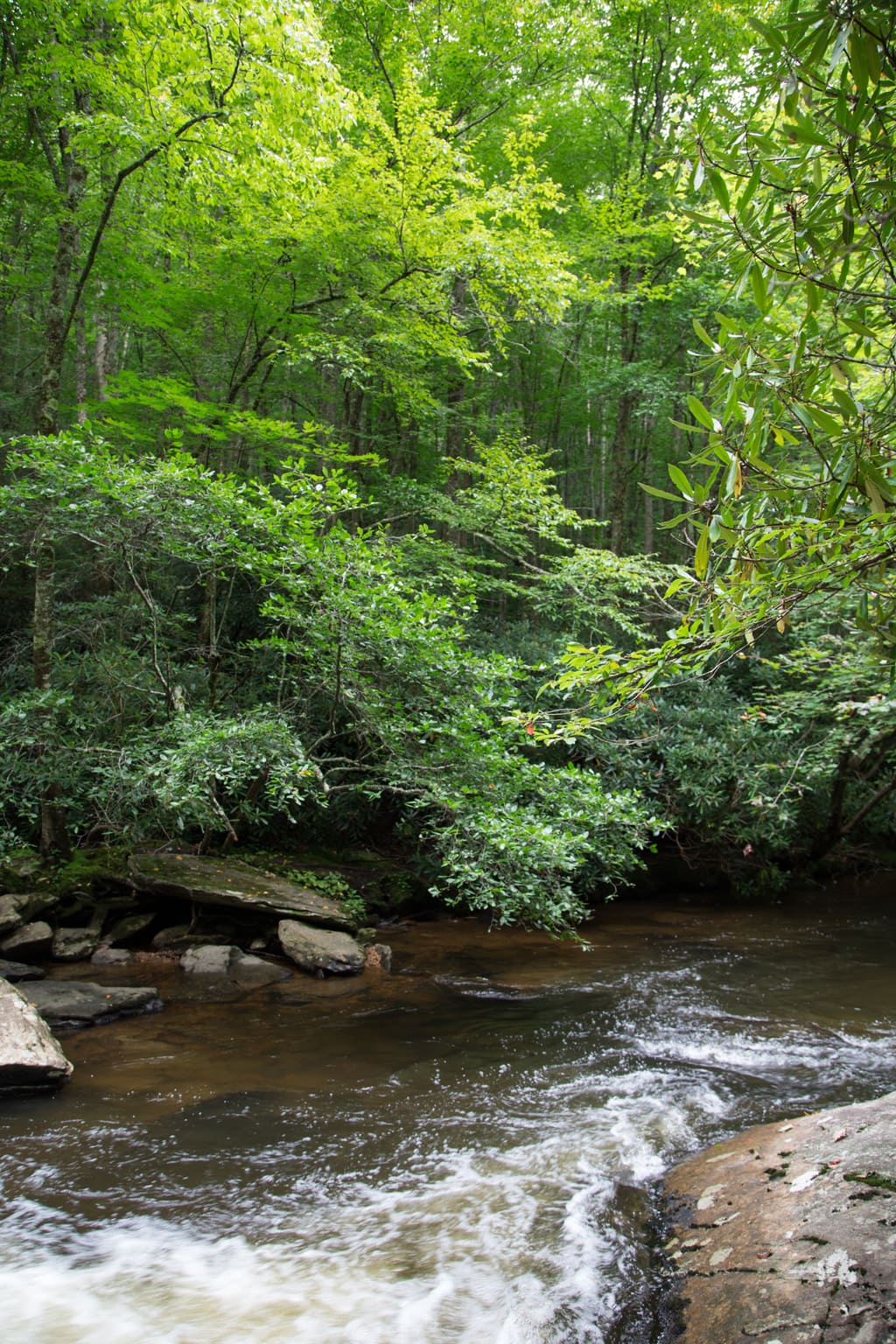 Nature shot of a North Carolina mountain stream and a tall forest background.